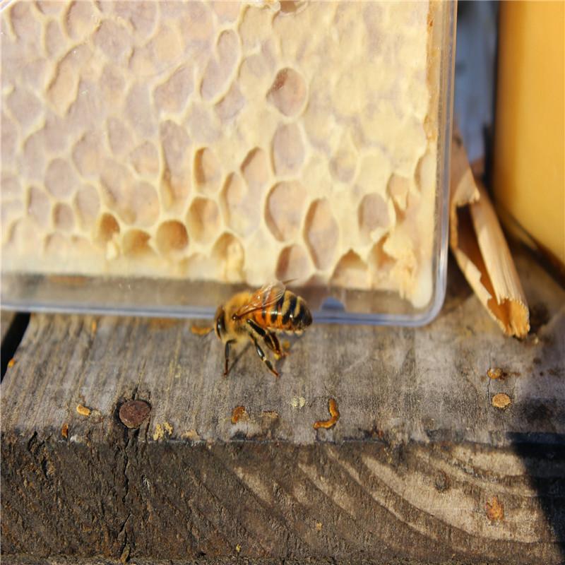 梦见蜜蜂窝_纯天然原生态蜂巢蜜蜂窝蜜无污染农家百花巢蜜蜂蜜包邮250克